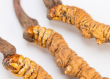 冬虫夏草怎么吃最好 冬虫夏草的金沙国际娱乐场官网