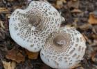 初秋蘑菇的挑选方法 初秋蘑菇的营养功效