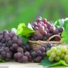 常见的黑色水果有哪些 吃黑色水果的好处