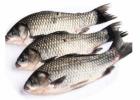 海鲜不能和什么一起吃 海鲜的金沙国际娱乐场官网作用