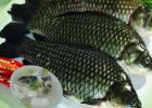 如何才能挑出鲜鱼 鲜鱼的挑选方法