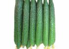 黄瓜的食用方法 黄瓜怎么吃更健康