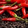 红辣椒怎么炒好吃 炒红辣椒又有哪些技巧