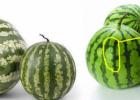 如何挑选出好西瓜 熟瓜是什么样的