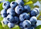 常吃蓝莓对身体有哪些好处
