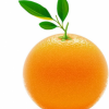 橙子都有哪些金沙国际娱乐场官网 吃橙子的好处
