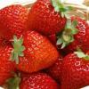 吃草莓要注意哪些问题 吃草莓易感染哪些疾病