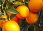 吃橘子要注意哪些事项 橘子的营养价值