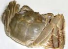 清水蟹有哪些做法 清水蟹在呢么做好吃