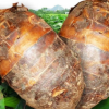 芋头的营养价值 秋季吃芋头的好处
