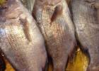 加吉鱼有哪些营养价值以及食用方法
