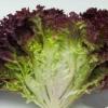 狗牙生菜的营养成分 狗牙生菜不能和什么一起吃