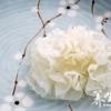 桂圆红枣银耳汤的金沙国际娱乐网址价值