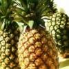 菠萝的金沙国际娱乐网址价值 菠萝的金沙国际娱乐场官网与作用