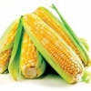 玉米粥的好处和金沙国际娱乐网址价值