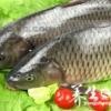 草鱼的营养价值 草鱼怎么吃