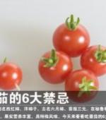 吃番茄的6大禁忌(6p