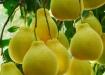 柚子皮变废为宝 清热化痰蜂蜜柚子茶这样做