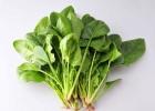 菠菜金沙国际娱乐场官网 女性吃它可以补血抗衰老