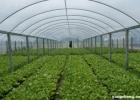 大寒节气农作物要怎么打理? 农户外出要保暖防