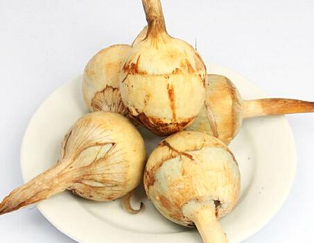 慈菇的金沙国际娱乐网址 了解兹菇的药用价值