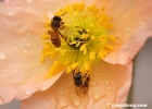 如何应对花粉过敏现象 7大方法轻松治过敏