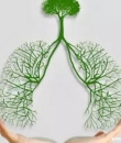 """3种习惯伤肺 你在亲手让自己""""未老先衰"""""""