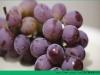 """水果误区:新鲜葡萄表面的白霜其实是""""守护神""""[多图]"""