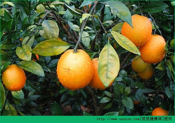 橙子有什么金沙国际娱乐网址?橙子金沙国际娱乐网址价值有哪些?(4)