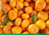 肺炎能吃橘子吗?肺炎吃橘子有什么影响?[多图]