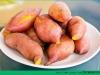 安徽红薯滞销 红薯的功效与作用介绍[多图]
