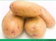 土豆和马铃薯一样吗?土豆和马铃薯的区别是什么?[多图]