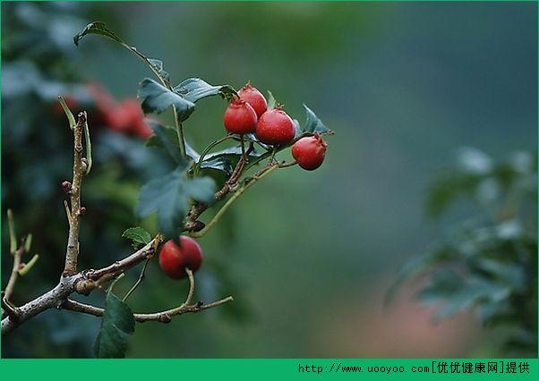 草莓和什么食物最配?草莓搭配什么一起吃比较好?(3)