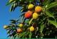 荔枝什么时候成熟?荔枝什么季节吃?[多图]
