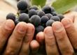 吃葡萄有什么功效?吃葡萄的功效与作用[多图]