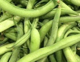 四季豆的营养价值有哪些