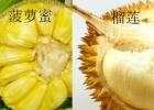 菠萝蜜和榴莲的区别 菠萝蜜和榴莲哪个好吃?[多图]