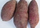 紫薯能生吃吗?紫薯生吃可以吗?[多图]