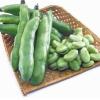 蚕豆病是什么 预防蚕豆病方法