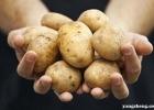 土豆的金沙国际娱乐场官网与作用